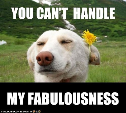 dandelions dogs fabulous flowers you-cant-handle-this