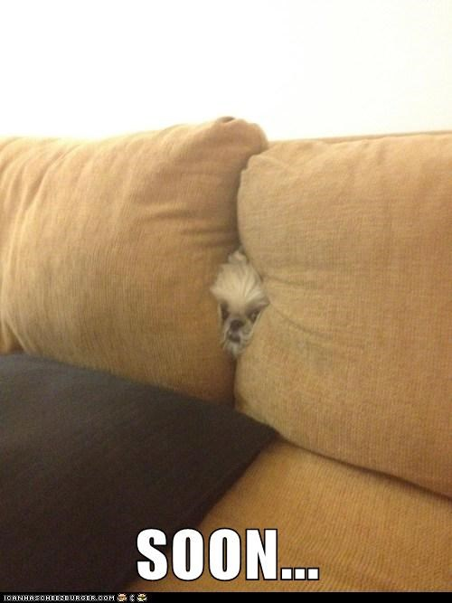 couch creepy dogs SOON what breed - 6328948736