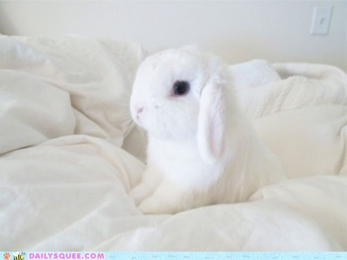blanket bunny happy bunday snow white - 6329071360
