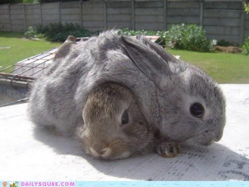 bunny cuddle cuddle puddle happy bunday pile up - 6329080576