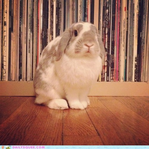 bunny,happy bunday,hipsters gonna hip,records,vinyl
