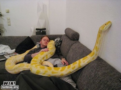 animals,boa constrictor,g rated,nap,snake,win