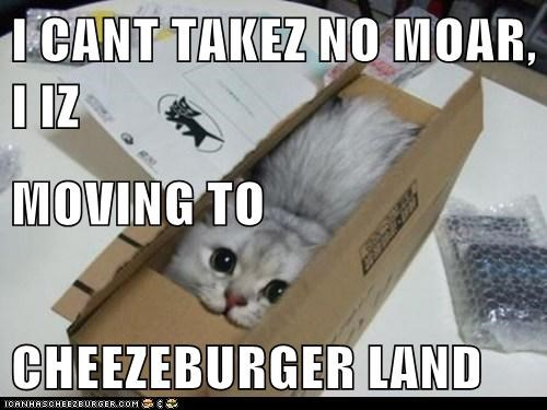 Cheezburger Image 6329463808