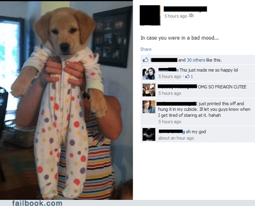 cute daww dogs failbook Featured Fail g rated puppy