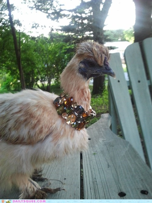bird,fashion,hen,Jewelry,pet,reader squee