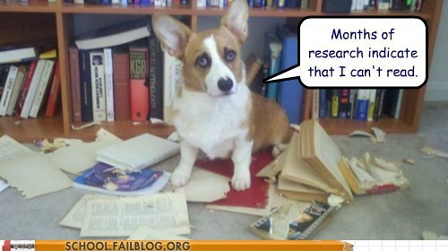 dog-cant-read i tried months of research - 6330335232