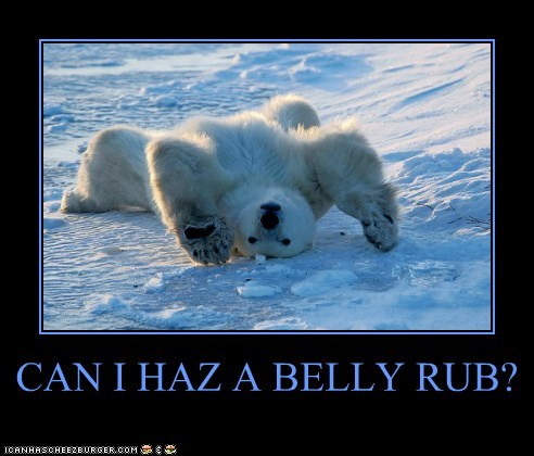 belly rub brave courage haz lying down polar bear