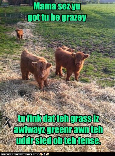 Cheezburger Image 6330710784