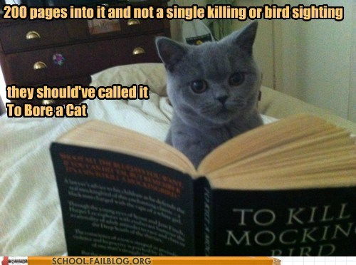 Cats class is in session english literature 220 reading to kill a mockinbird - 6330839040