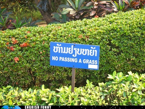 grass no passing a grass thailand - 6331031296