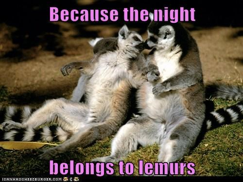 Because the night belongs to lemurs