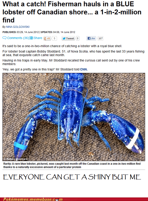IRL lobster news shiny - 6331194624