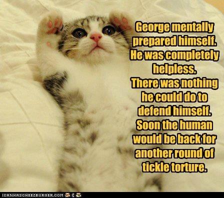 belly fun kitten tickle torture tummy - 6331484416