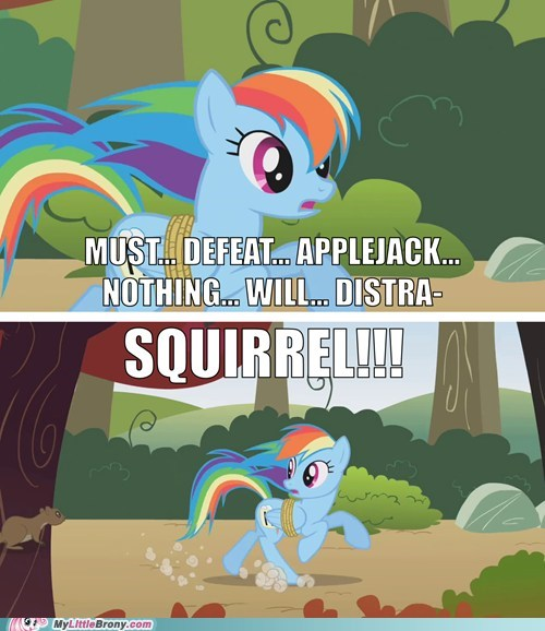 adhd comic comics rainbow dash squirrel - 6331641600