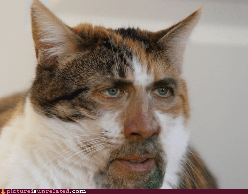 best of week cat nicholas cage shopped pixels wtf - 6331683328