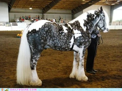 horse,long hair,snowflake,spots,squee