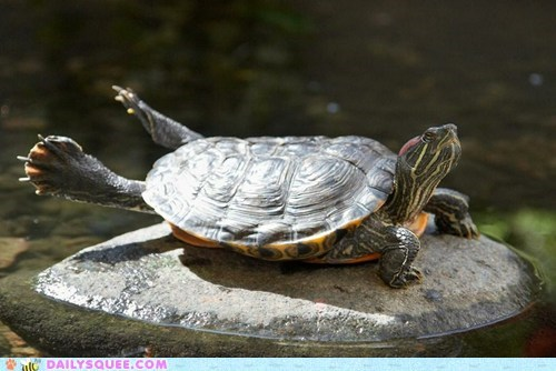 amphibians stretching turtle yoga