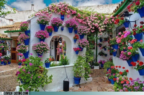 flowers,gardening,pots,walls