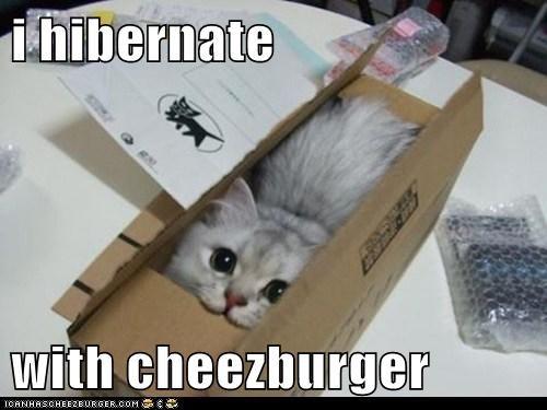 Cheezburger Image 6332010240