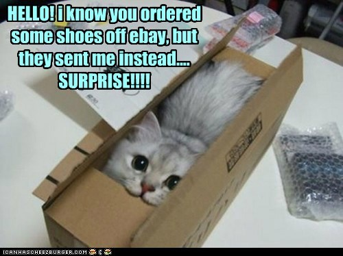 HELLO! i know you ordered some shoes off ebay, but they sent me instead.... SURPRISE!!!!