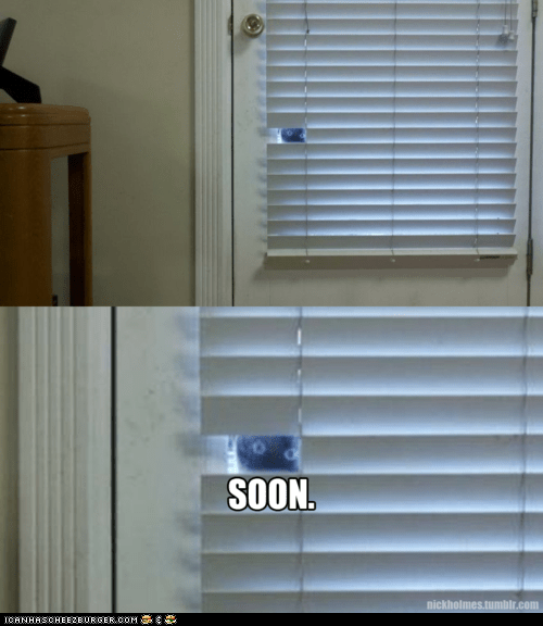 Cats creepy eyes lolcats Memes SOON spying watcing windows - 6332046336