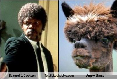 actor,celeb,funny,llama,Samuel L Jackson,TLL