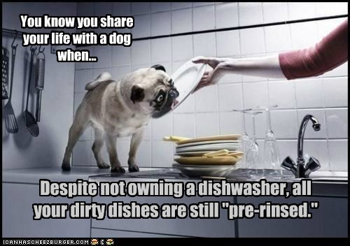 """You know you share your life with a dog when... Despite not owning a dishwasher, all your dirty dishes are still """"pre-rinsed."""""""