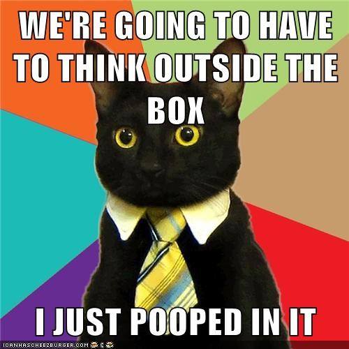 box Business Cat outside poop work - 6332836096