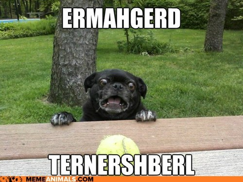 berks dogs Ermahgerd Hall of Fame Memes omg tennis balls