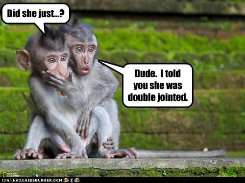 flexible monkeys watching - 6332990976