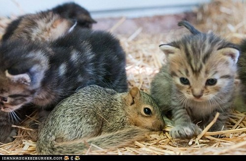 Cats cyoot kitteh of teh day Interspecies Love kitten squirrels tiny - 6333183488