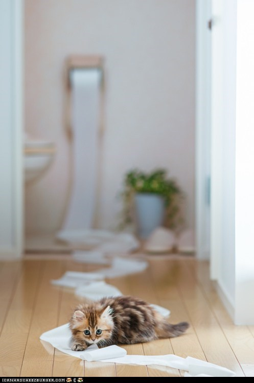 Cats cyoot kitteh of teh day destruction kitten messes toilet paper - 6333186048