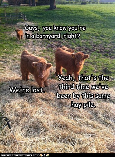We're lost. Yeah, that's the third time we've been by this same hay pile. Guys, you know you're in a barnyard, right?