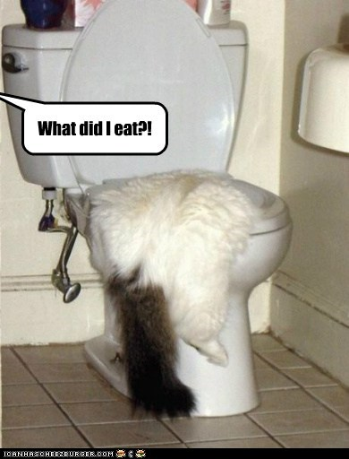 What did I eat?!