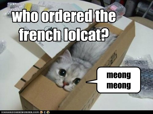 who ordered the french lolcat? meong meong