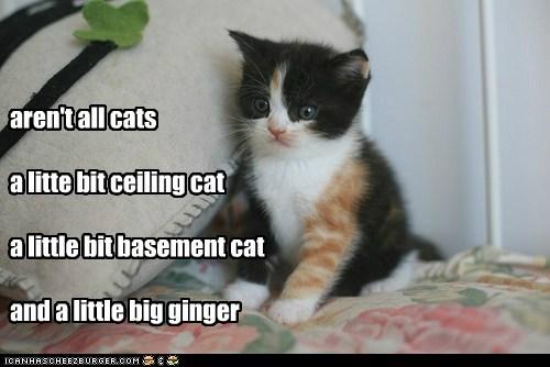 aren't all cats a litte bit ceiling cat a little bit basement cat and a little big ginger
