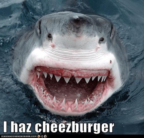 Cheezburger Image 6333503488