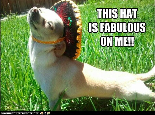 best of the week captions chihuahua dogs fabulous Hall of Fame hat hats im-fabulous sombrero sombreros - 6333818880