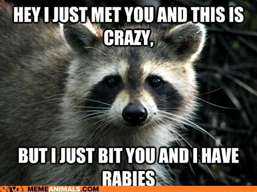 best of the week call me maybe carly rae jepsen Hall of Fame lyrics rabies raccoons Songs