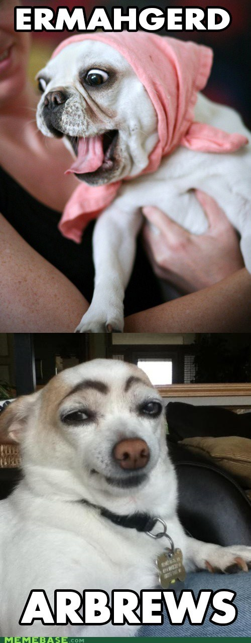 best of week,derp,dogs,Ermahgerd,eyebrows,goggie
