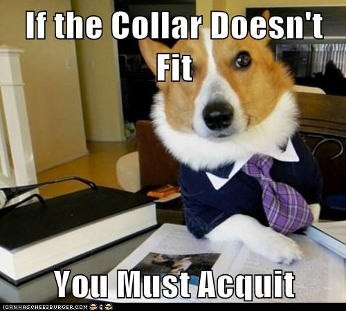 acquit collars dogs Lawyer Dog Lawyers Memes rhymes - 6334695680