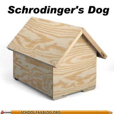 dog house,quantum mechanics 300,schrodingers dog
