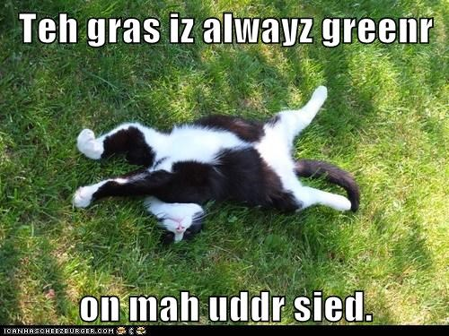 Teh gras iz alwayz greenr on mah uddr sied.