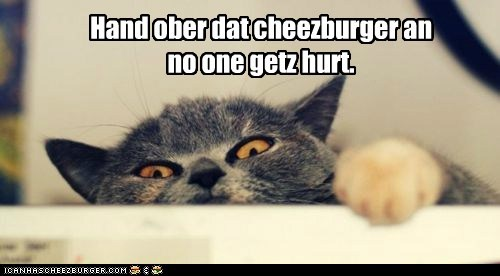 Cheezburger Image 6335060736