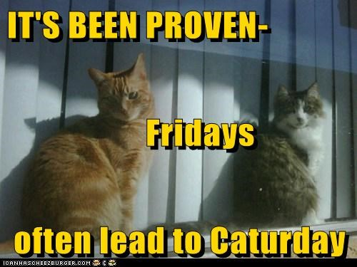 IT'S BEEN PROVEN-       Fridays often lead to Caturday