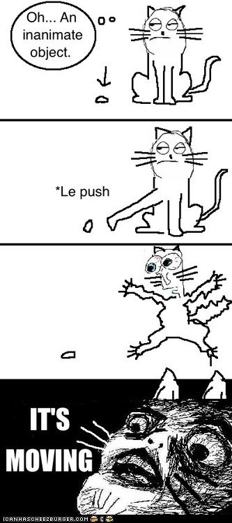 Cats,dumb,inanimate objects,Memes,moving,push,Rage Comics,raisins