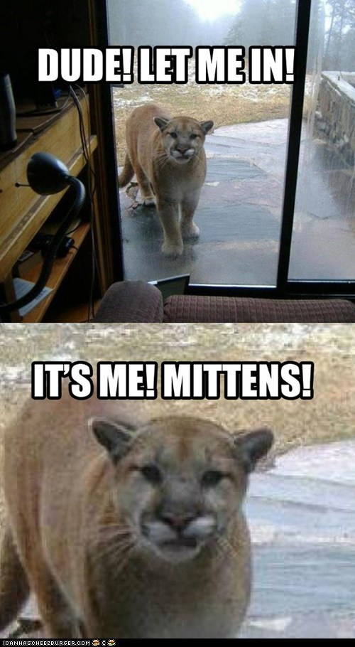 big cats,Cats,cougars,doors,let me in,lies,mittens