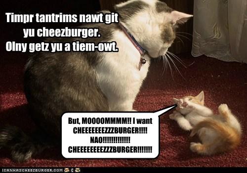 Cheezburger Image 6335962112
