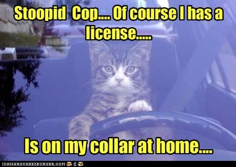 car collar cop drive license police steer - 6336150784