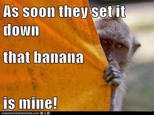 banana mine monkey plotting sneaky stalking steal watching - 6336179712